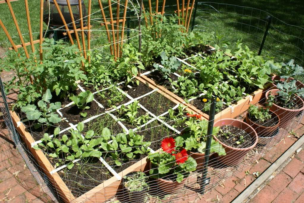 Inspiring Square Foot Gardening Plans Ideas Plant Spacing