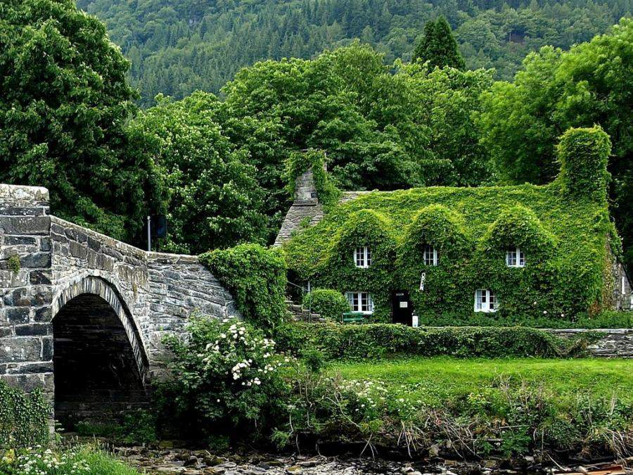 Ivy Covered Cottage House Woods